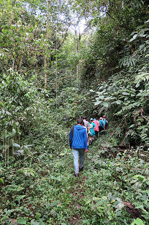 Hiking through dense rainforest